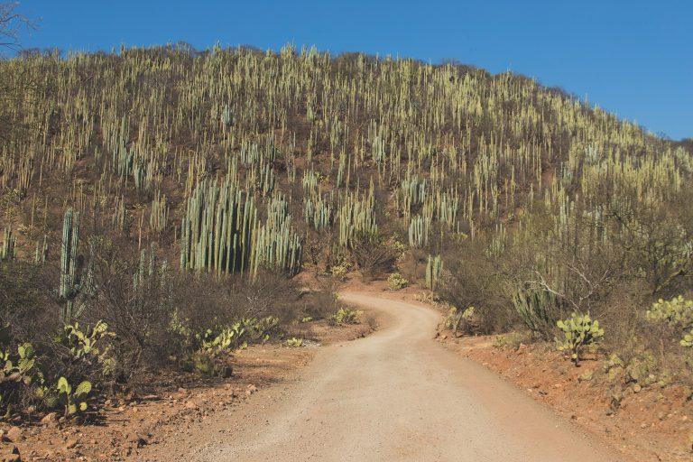 Bosque de Puebla